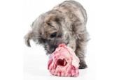 Anne's Dyrecenter Greve